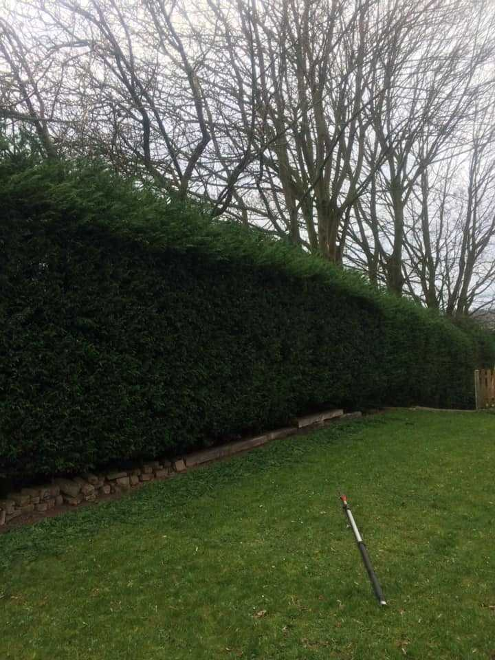 Northwich Tree Surgery Hedge Cutting