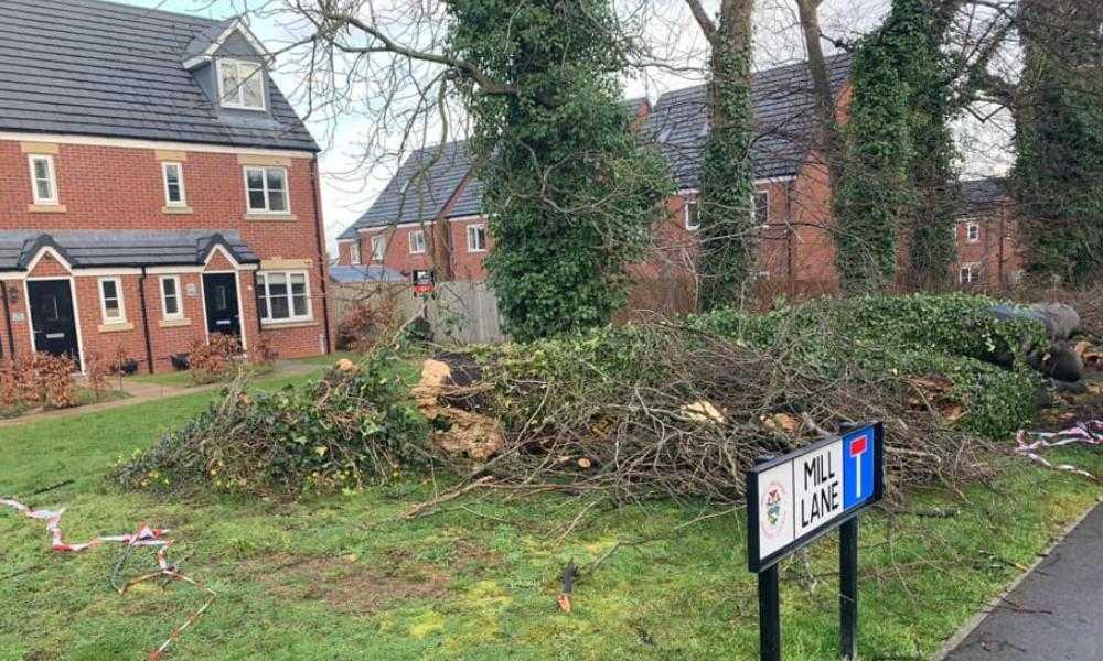 Northwich Tree Surgery