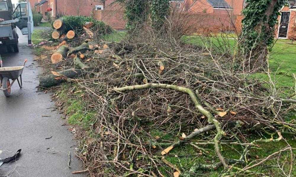 Northwich Tree Surgery Tree Pruning